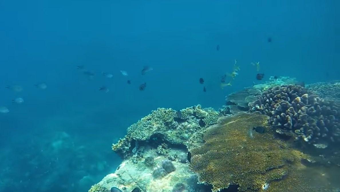 Lặn ngắm san hô ở đảo hòn Mun Nha Trang