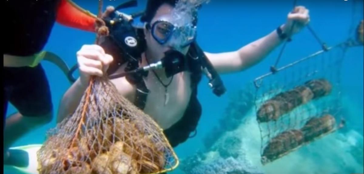 Lặn biển bắt ngọc trai ở đảo Hòn Tằm